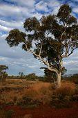 View Across Pilbara, Westen Australia