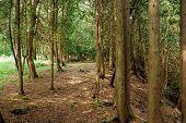 Cedar Forest Trail