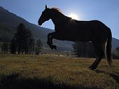 Silhouette Of Hobbled Horse