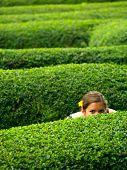 A Girl In A Maze