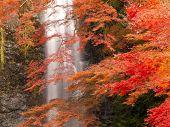 stock photo of minos  - Minoh waterfall during autumn in Osaka Japan - JPG