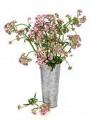 Valerian kruid bloemstuk in een oude aluminium vaas op witte achtergrond. Natuurlijk alternatief