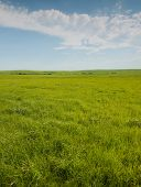 stock photo of tallgrass  - Wide open prairie with lush green grass in late spring - JPG