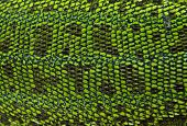pic of giant lizard  - Leather green lizards closeup as a background texture - JPG