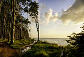 Baltic sea coast at Nienhagen with Haunted Woods in sunset