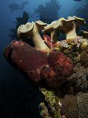 Mushroom Leather Coral
