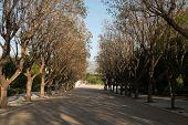 Park Zappeion