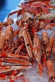 picture of norway lobster  - Lobsters taken at Bergen - JPG
