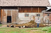 stock photo of scarecrow  - Rustic barn and yard with chickens and a scarecrow - JPG