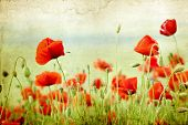stock photo of stamen  - Vintage photo of poppies on green summer field - JPG