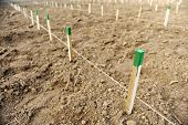 image of afforestation  - Wooden stakes for supporting tree saplings growing - JPG