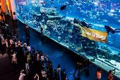Largest Aquarium Of The World In Dubai Mall