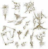 Garden herbs sketch with birds plants gumboots