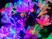Glowing Abstract Flowers On A Dark Background
