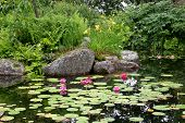 Red Lily Pond