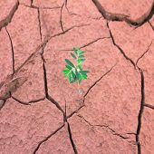 Tree Growing On Cracked Earth