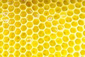 Honeycomb - close up texture