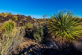 Desert Landscape with Black Lava Flow in New Mexico