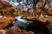 image of guadalupe  - Beautiful Fall Foliage Surrounding the Guadalupe River Texas - JPG