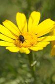 Black Beetle Spring Flower