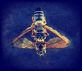a bee on a mirror with grunge layers toned with a retro vintage instagram filter