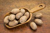 stock photo of pecan nut  - rustic scoop of pecan nuts  - JPG