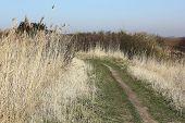 Path Trough The Marshland On The Island Of Sylt