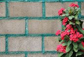 image of thorns  - The red crown of thorns decor at the brick wall - JPG