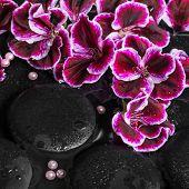 stock photo of geranium  - beautiful spa still life of geranium flower beads and black zen stones with drops in reflection water Royal Pelargonium closeup - JPG