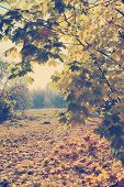 foto of maple tree  - Autumn natural landscape - JPG