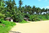 foto of beach-house  - Wooden small houses on the beach in Bentota - JPG