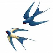 pic of swallow  - Vector two flying swallows on white background - JPG