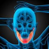 pic of jaw-bone  - 3d rendered illustration  - JPG