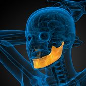 picture of jaw-bone  - 3d rendered illustration  - JPG