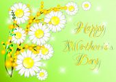 foto of mimosa  - Greeting card with daisies and mimosa on Mother - JPG