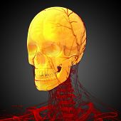 pic of mandible  - 3d render medical illustration of the skull  - JPG