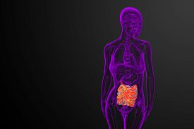 foto of small-intestine  - 3d rendered illustration of the small intestine  - JPG