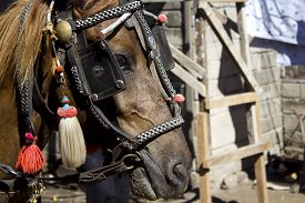 foto of carriage horse  - Close up of an horse in Gili Islands Indonesia used for carriage - JPG