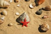 Red Star And Shells On Sand
