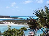 Island Palms