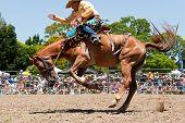 Cowboy Rides Wild Horse On Australia Day Rodeo Festival
