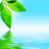 Fresh Leaf, Blue Sky And Shine Water