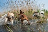 Cute Dogs Having Fun
