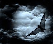 stock photo of drakula  - bat flying in the dark cloudy sky - JPG