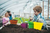Natural Soil. Rich Natural Soil For Gardening. Small Boy Farmer Work In Greenhouse With Natural Soil poster