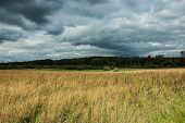 Dry And Tall Grass In A Wild Meadow, Green Forest And Dark Rainy Clouds poster