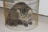 Cat In A Cage. Cat In A Bird Cage. Cat Behind The Bars. poster