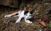 Little Kitten Lost In Park. Stray Cat Baby Portrait. Lovely Kitty Closeup. Sleeping Kitty Outdoor. S poster