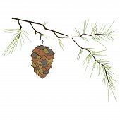 Fir-tree Branch With A Cone. Vector Illustration Of A Pine Cone On A Pine Branch. Fir-tree Branch Wi poster