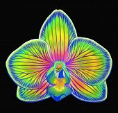 Colorful Fantasy Phalaenopsis Orchid